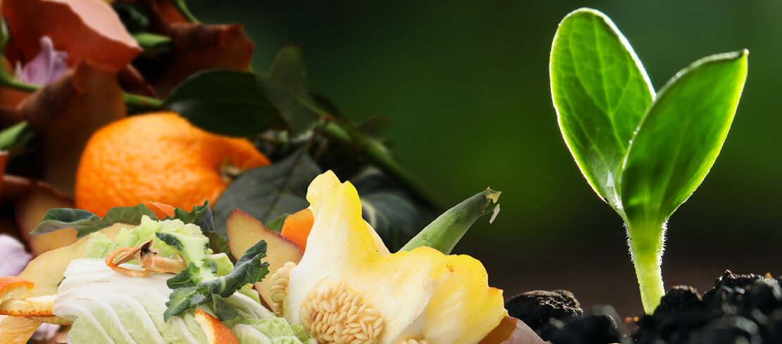 Food and organic waste in the circular economy